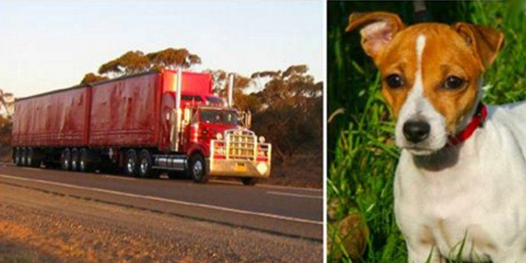 Cão faz caminhoneiro segui-lo em estrada. Mas ele nunca imaginou para onde seria levado