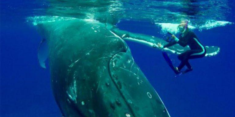 Bióloga vê baleia se aproximar quando percebe que ela tentava apenas a proteger